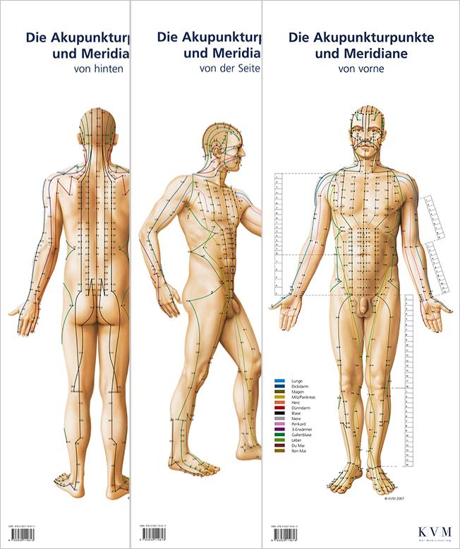 Lernposter: Die Akupunkturpunkte und Meridiane