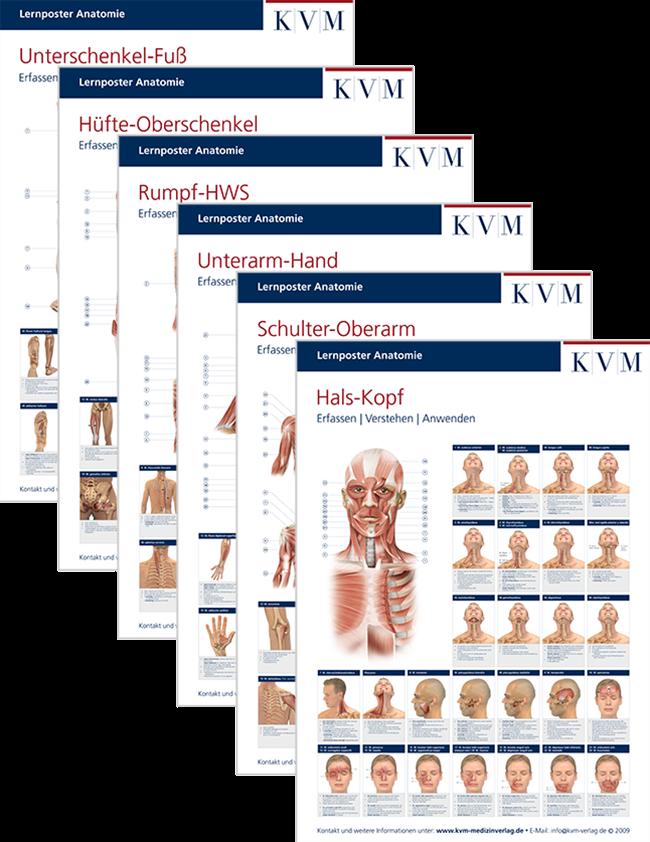 Lernposter Anatomie – Muskulatur