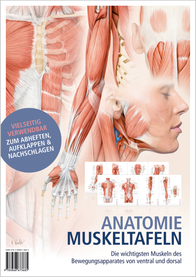 Anatomie Muskeltafeln